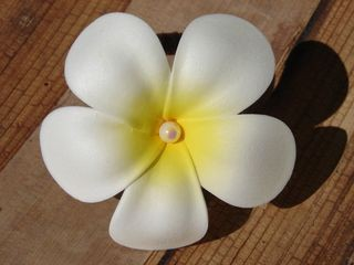 Plumeria-Haarband gelb-weiss mit Perlmutt
