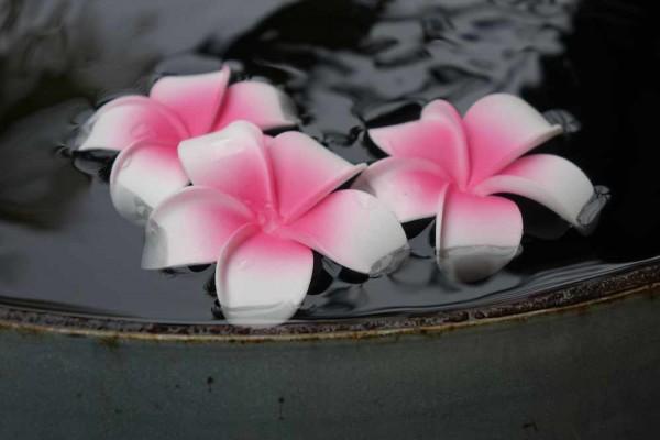 Schwimmblüte Plumeria weiss-pink Nr. 26