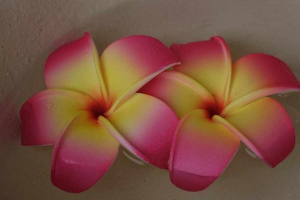 Schwimmblüte Plumeria rosa-gelb-orange Nr. 12