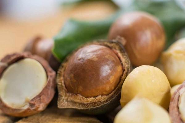 Macadamia integrifolia / Macadamianuss