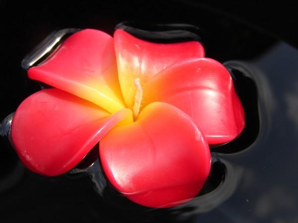 Plumeria Kerzen gelb-rot