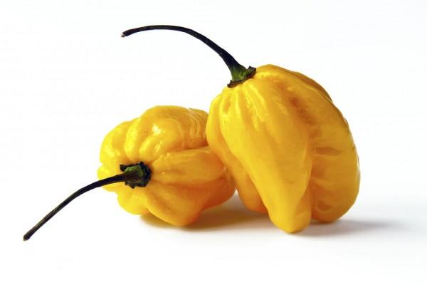 Habanero Zitro / Chili