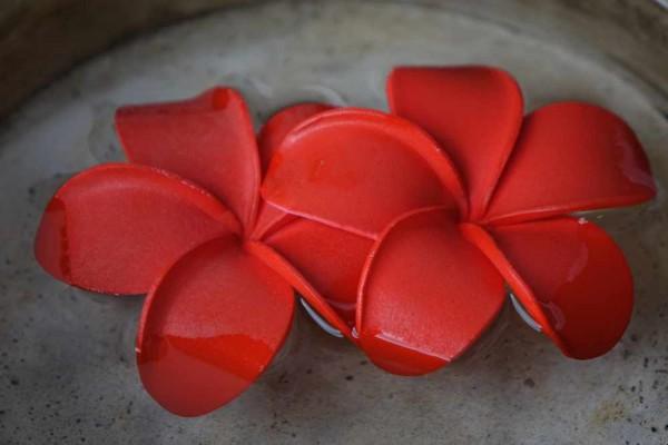 Schwimmblüte Plumeria rot Nr. 46
