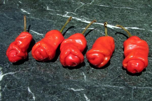 Peter Pepper / Chili