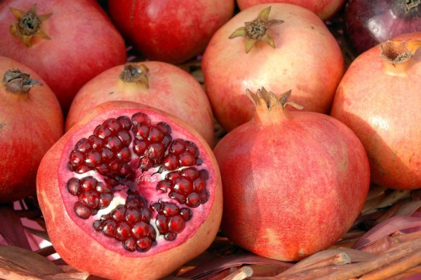Punica granatum / Granatapfel