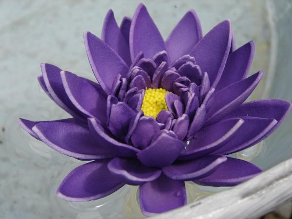 Schwimmblüte Lotus violett
