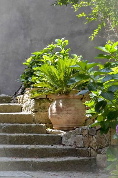 Cycas revoluta / Japanischer Palmfarn