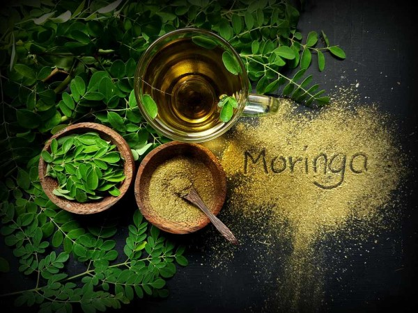 Moringa oleifera / Meerrettichbaum